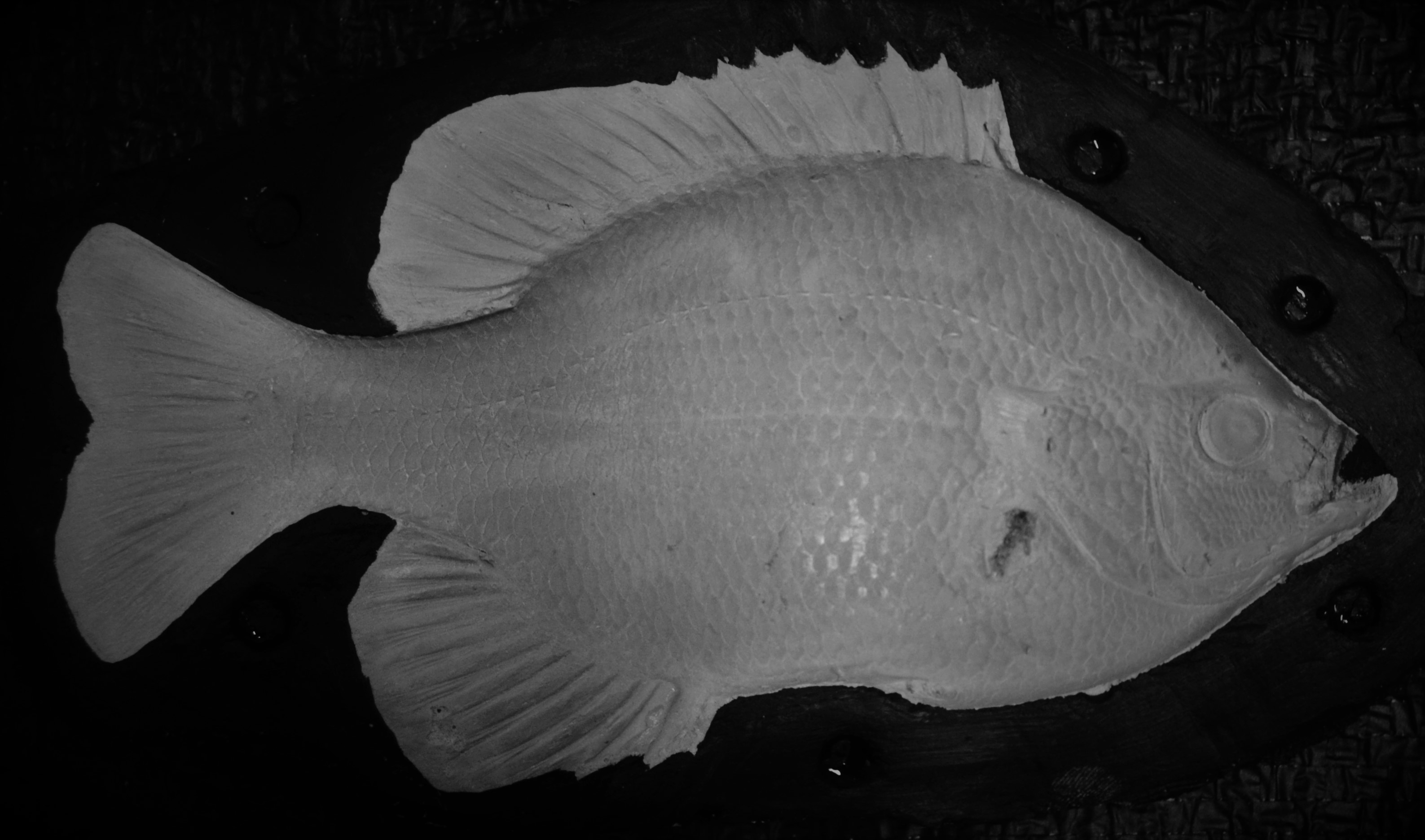 "BLUEGILL - 8.5""X 8""- .75 LB. RT ""S"""